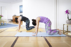 Two women doing yoga at home cat pose Stock Image