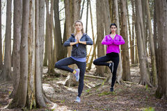 Two women doing yoga in the middle of the woods Royalty Free Stock Photo