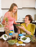 Two women with dried herbs Royalty Free Stock Image