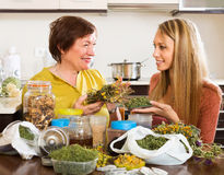 Two women with dried herbs Royalty Free Stock Photography