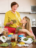 Two women with dried herbs Stock Photo