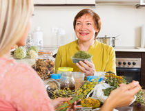 Two women with dried herbs Stock Photography
