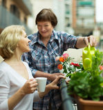 Two women drink tea on balcony Stock Images