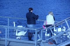 two women feeding the swans Royalty Free Stock Image