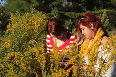 Two Women in a Field Looking at Goldenrods. Two women looking at flowers in a field Stock Photos