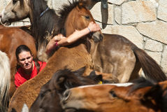 Two  women  Fighters and one horse. Pontevedra, Spain - August 7, 2011: Two women riders trying to bring down a wild horse, and immobilized, cut the mane, in one Royalty Free Stock Image