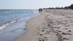 Two women in hats walk along sandy beach away from camera in summer. Two women in hats walk away from camera along empty sandy beach in summer at sea or ocean stock video