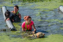 Two women helping their dogs over the obstacles in the water. royalty free stock photography