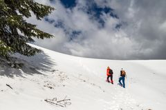 Two women hikers climbing towards the top of a snowy ridge in Bucegi mountains, Romania, passing by a green tree branch. On their way up, during a Winter stock images