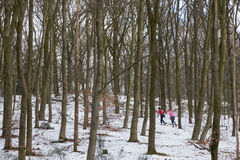 Two women jog in winter beech forest. Two women in colorful outfit jog in dutch winter beech forest Royalty Free Stock Photos