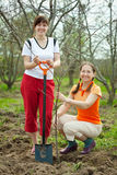 Two women making orchard Stock Photos