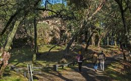 Trio Walks in Woods near Old Stone Ruins. Two Women and a Man Stroll in the Forests of the Jack London State Park in Glen Ellen, California near the Abandoned Royalty Free Stock Photography