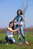 Two  women planting tree Royalty Free Stock Images