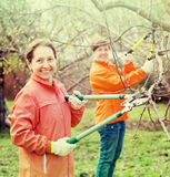 Two women pruning apple tree Royalty Free Stock Photo