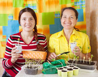 Two women  with  seedling Stock Photos