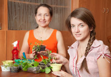 Two women with  seedlings Stock Photos