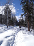 Two women snowshoe. In a mixed conifer and aspen forest  on a cold winter day,   Colorado Stock Photos