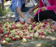 Two women sort the colorful apples on the ground. Detail shop royalty free stock photography