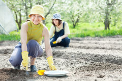 Women sows seeds in bed. Two  women sows seeds in bed at field Royalty Free Stock Images