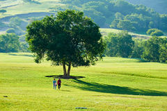Two women under the tall tree on the meadow. The photo was taken in huamugou national forest park Hexigten banner Chifeng city Nei Monggol Autonomous Region Stock Photo