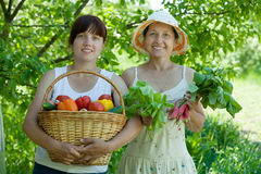 Two  women with vegetables harvest Stock Images