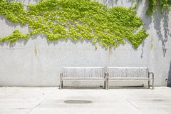 Two wooden benches in front of concrete wall. With vines royalty free stock images