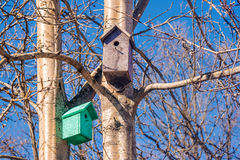 Two wooden birdhouses on a tree in the spring Stock Image