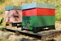 Two Wooden Box-Style Beehives With Swarming Bees. A colorful pair of beehives sitting on a pallet. A large number of bees can be seen around the entrances royalty free stock image