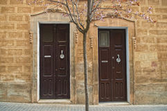 Two wooden doors with blooming tree Royalty Free Stock Photo