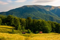 Two woodshed near the forest in mountains. Beautiful summer scenery in evening. location Apetska mountain, Ukraine Stock Image