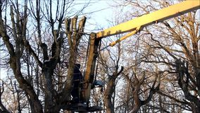 Two workers cut off branches from trees in the park with the help of an industrial hoist stock footage