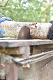 Two workers cutting wood with circular saw Royalty Free Stock Photo