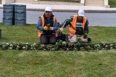 Planting flowers to city stock photos