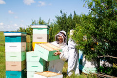 Two workers replacing beehives. Two workers replacing empty beehives with full ones Stock Images