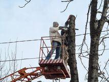 Two workers sawing a wood trunk with a chainsaw, standing on an aerial work platform, among the electrical wires. Sawdust flying. Around pollarded tree stock photos