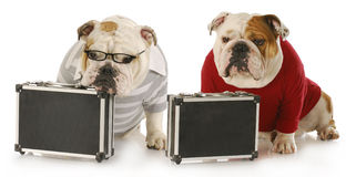 Two working dogs Stock Images