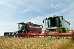 Two working harvesting combines. In the summer field of wheat cereals Royalty Free Stock Images