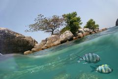 Two worlds. Underwater world with two fishes and coast Royalty Free Stock Images