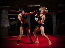 Two wrestler women Royalty Free Stock Photography