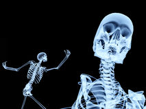 Two Xray Bones 3. An image of two xrays of some skeletons, a good Halloween or possible medical based image Royalty Free Stock Images
