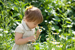 Two-year  girl in  daisy plant Stock Images
