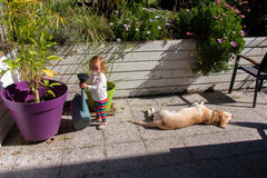 Two year old girl and Labrador Retriever in the patio of a country house Royalty Free Stock Image