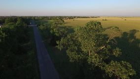 Two 300 years old trees of Jasen by the road in front od village,. Drone aerial footage stock footage
