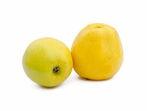 Two yellow apple Royalty Free Stock Images