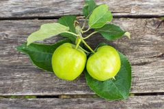 Two yellow apples with leaves on wooden table Royalty Free Stock Images