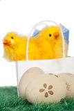 Two yellow baby chicks Stock Photography