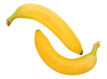 Two yellow banana Royalty Free Stock Image