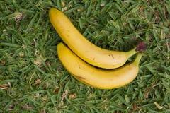 Two yellow bananas Royalty Free Stock Photo
