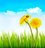 Two yellow dandelions with a ladybug. On a nature spring background. Vector Stock Photo
