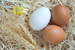 Two yellow eggs and one white egg, wheat and yellow flowers are Stock Image